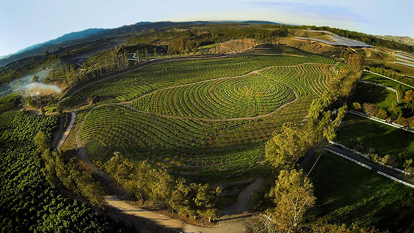 An on this farm there was a pig – and a perfect microcosmic eco-system