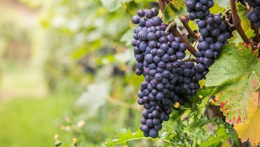 Paula's Wines of the Week – Week starting 27 July 2020