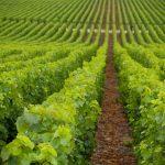 Paula's Wines of the Week – 14 September 2020