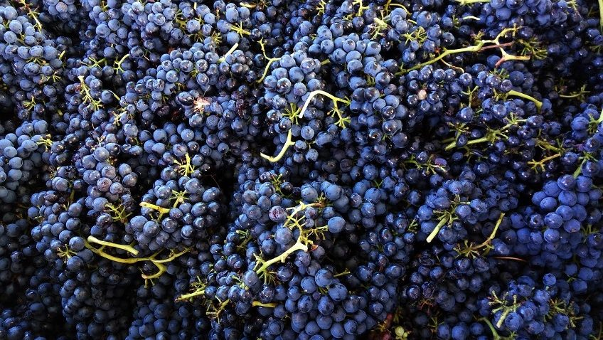 Is it Syrah or Shiraz?