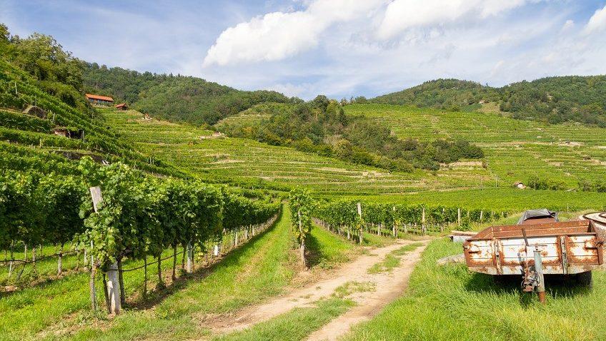 Paula's Wines of the Week – 7th June 2021